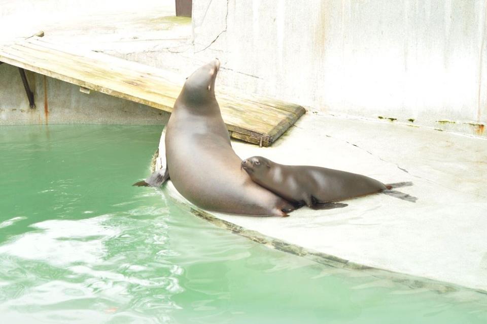 Posjet Zoo Vrtu 11