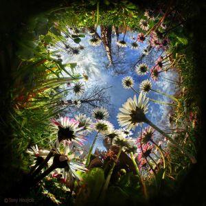 iz mravlje perspektive