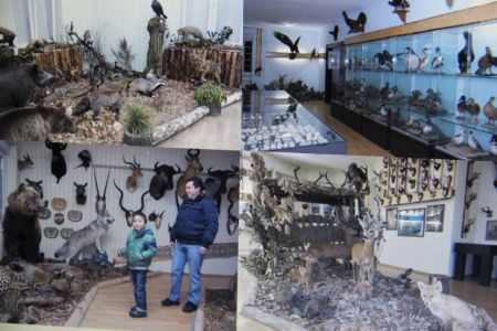 Poljaci Muzeji 5